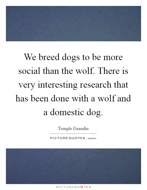 We breed dogs to be more social than the wolf. There is very interesting research that has been done with a wolf and a domestic dog Picture Quote #1