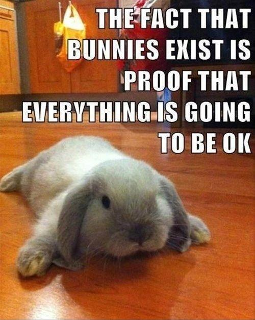 The fact that bunnies exist is proof that everything is going to be ok Picture Quote #1