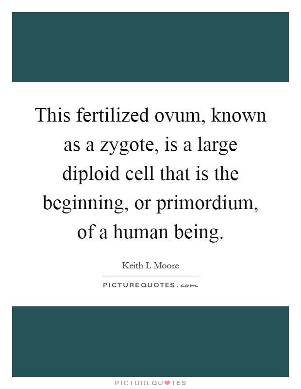 This fertilized ovum, known as a zygote, is a large diploid cell that is the beginning, or primordium, of a human being Picture Quote #1