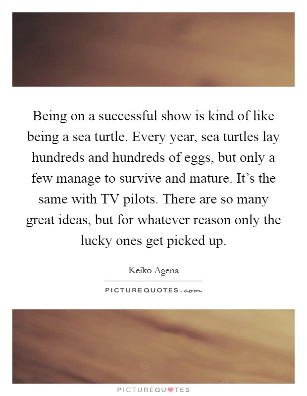 Being on a successful show is kind of like being a sea turtle. Every year, sea turtles lay hundreds and hundreds of eggs, but only a few manage to survive and mature. It's the same with TV pilots. There are so many great ideas, but for whatever reason only the lucky ones get picked up Picture Quote #1