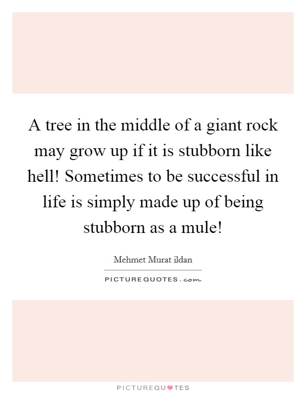 A tree in the middle of a giant rock may grow up if it is stubborn like hell! Sometimes to be successful in life is simply made up of being stubborn as a mule! Picture Quote #1
