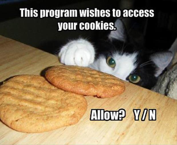 This program wishes to access your cookies. Allow? Y/N Picture Quote #1