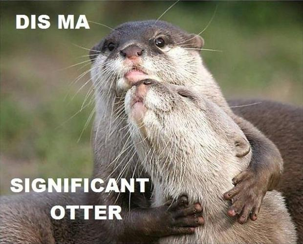 Dis ma significant otter Picture Quote #1
