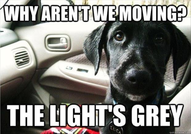Why aren't we moving? The light's grey Picture Quote #1