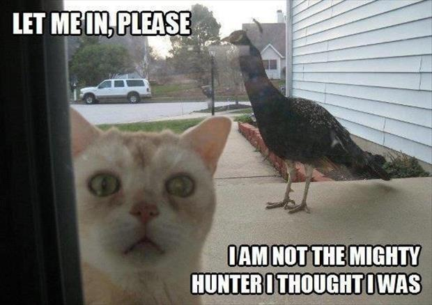 Let me in, please. I am not the mighty hunter I thought I was Picture Quote #1