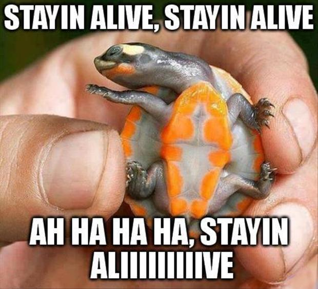 Stayin' alive, stayin' alive. Ah ha ha ha, stayin' aliiiiiiiiive Picture Quote #1