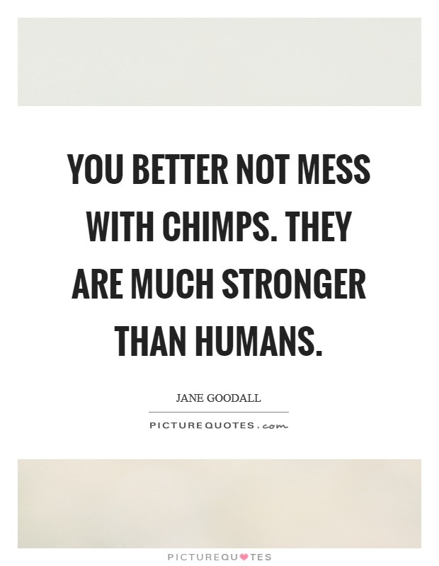 You better not mess with chimps. They are much stronger than humans Picture Quote #1