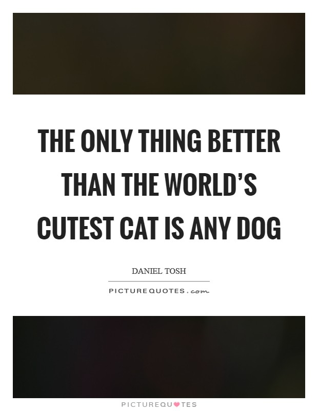 The only thing better than the world's cutest cat is any dog Picture Quote #1