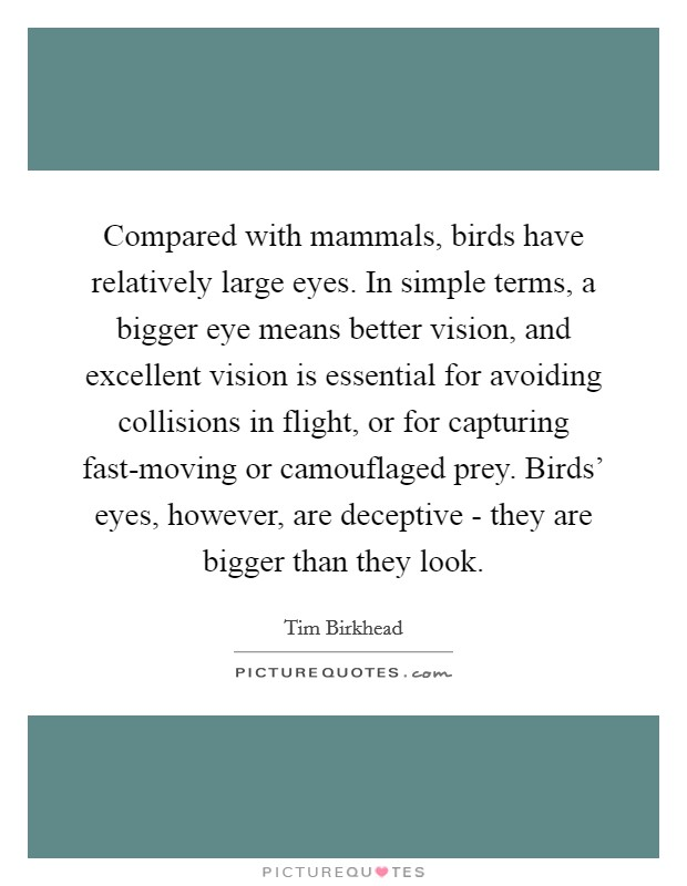 Compared with mammals, birds have relatively large eyes. In simple terms, a bigger eye means better vision, and excellent vision is essential for avoiding collisions in flight, or for capturing fast-moving or camouflaged prey. Birds' eyes, however, are deceptive - they are bigger than they look Picture Quote #1