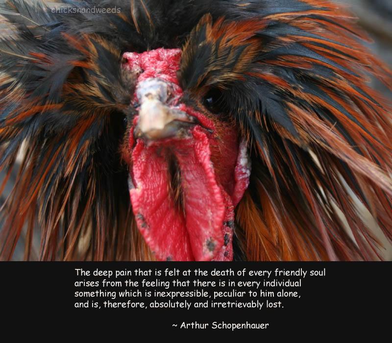 Arthur Schopenhauer Quote Animals 1 Picture Quote #1