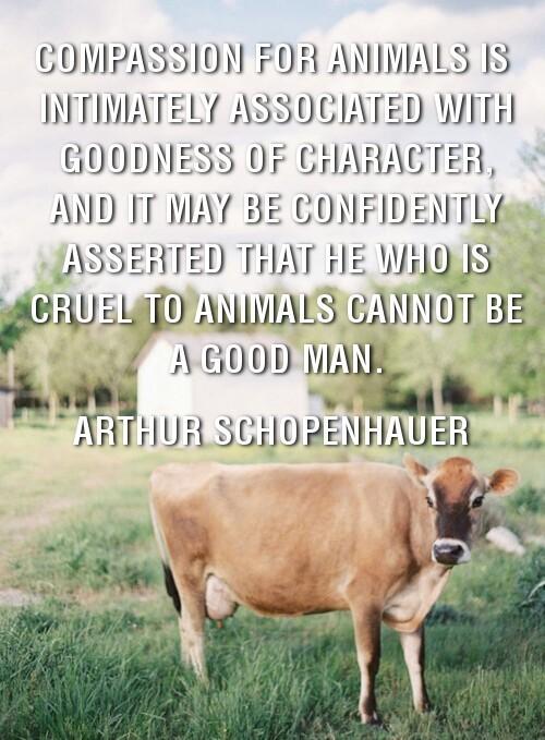 Arthur Schopenhauer Quote Animals 2 Picture Quote #1
