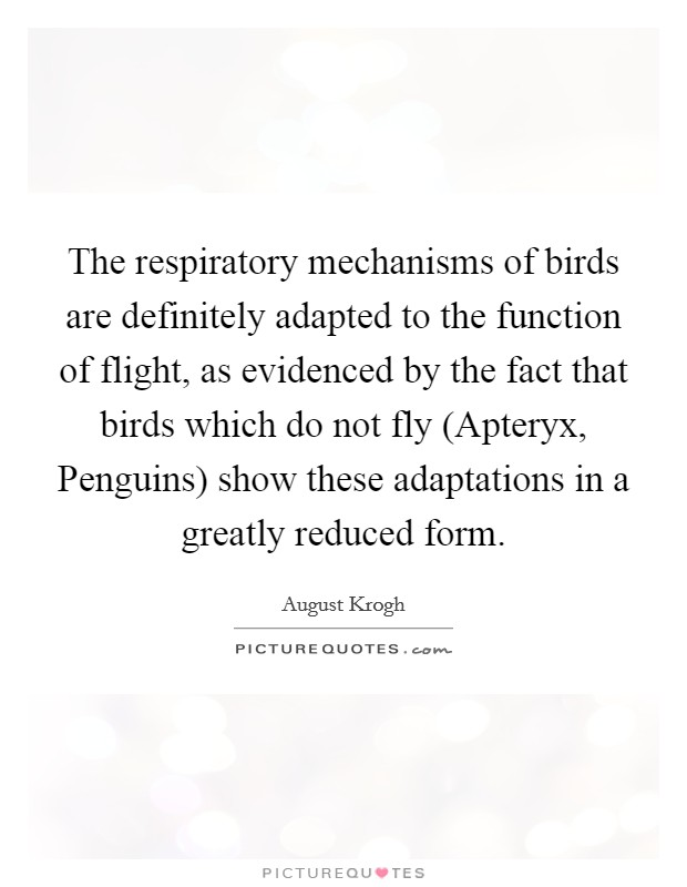 The respiratory mechanisms of birds are definitely adapted to the function of flight, as evidenced by the fact that birds which do not fly (Apteryx, Penguins) show these adaptations in a greatly reduced form Picture Quote #1