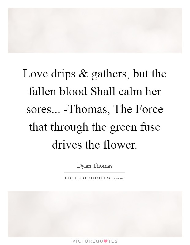 Love drips and gathers, but the fallen blood Shall calm her sores... -Thomas, The Force that through the green fuse drives the flower Picture Quote #1