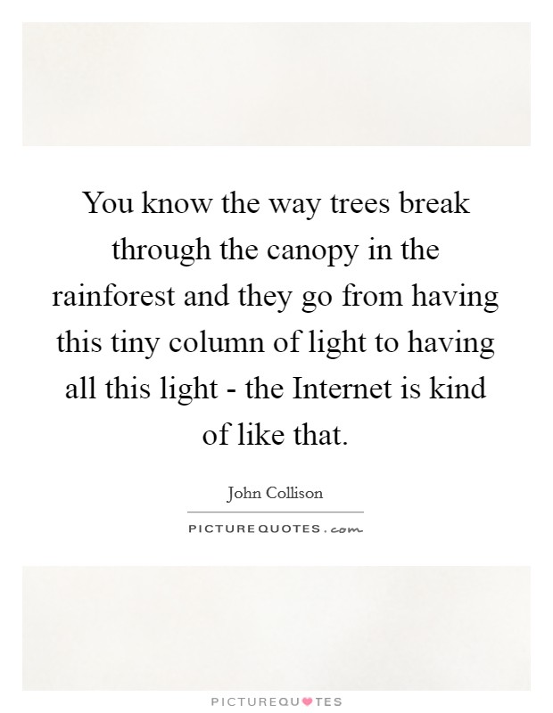 You know the way trees break through the canopy in the rainforest and they go from having this tiny column of light to having all this light - the Internet is kind of like that Picture Quote #1