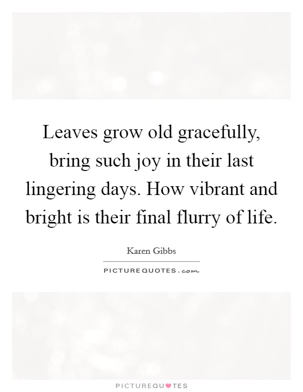 Leaves grow old gracefully, bring such joy in their last lingering days. How vibrant and bright is their final flurry of life Picture Quote #1