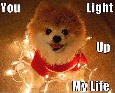 You light up my life Picture Quote #1