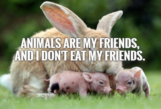 Animals are my friends,  and I don't eat my friends Picture Quote #1
