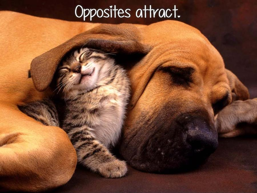 Opposites attract Picture Quote #1