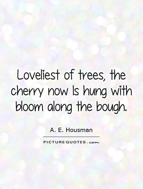Loveliest of trees, the cherry now Is hung with bloom along the bough Picture Quote #1
