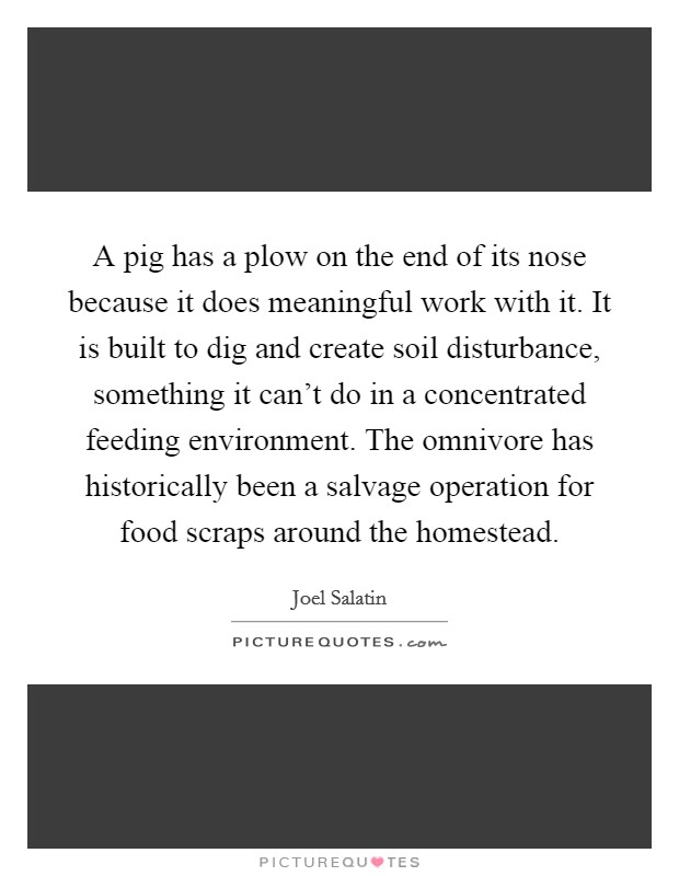 A pig has a plow on the end of its nose because it does meaningful work with it. It is built to dig and create soil disturbance, something it can't do in a concentrated feeding environment. The omnivore has historically been a salvage operation for food scraps around the homestead Picture Quote #1
