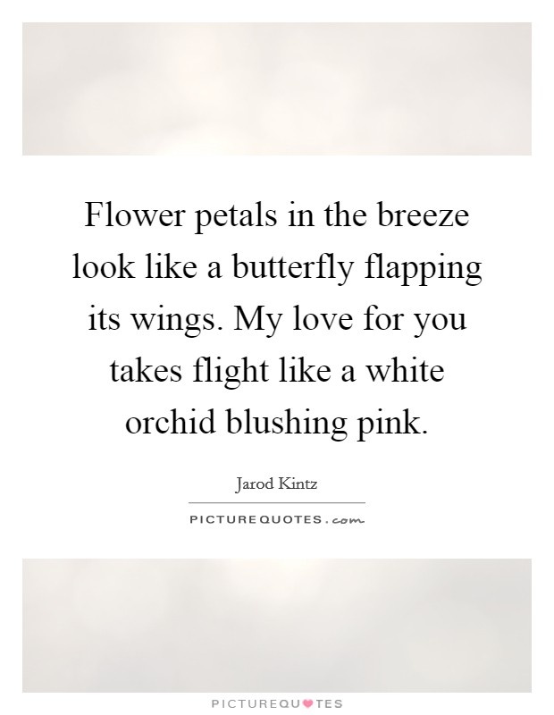 Flower petals in the breeze look like a butterfly flapping its wings. My love for you takes flight like a white orchid blushing pink Picture Quote #1