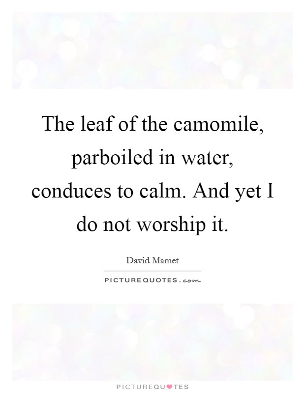 The leaf of the camomile, parboiled in water, conduces to calm. And yet I do not worship it Picture Quote #1