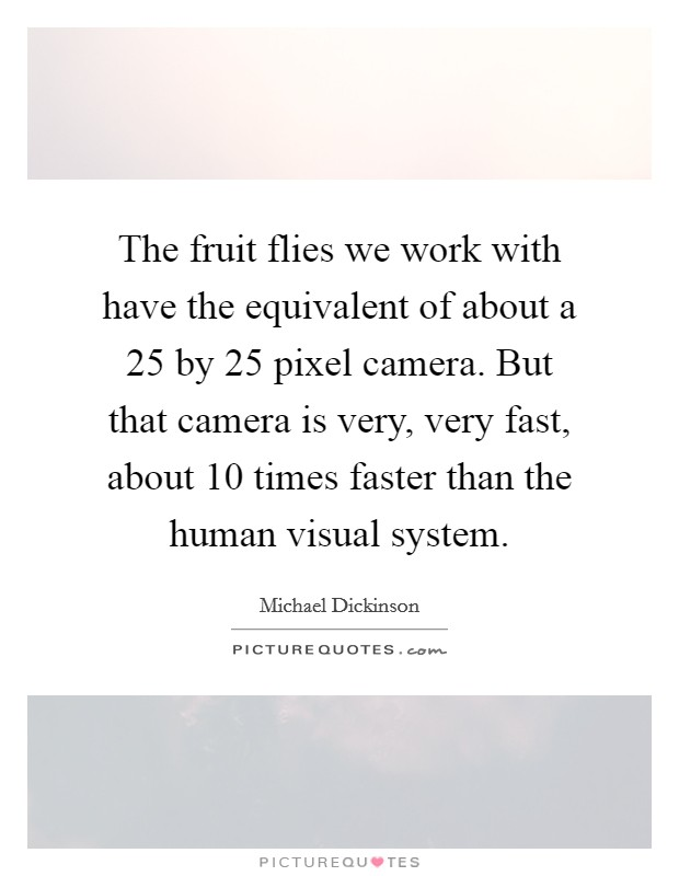 The fruit flies we work with have the equivalent of about a 25 by 25 pixel camera. But that camera is very, very fast, about 10 times faster than the human visual system Picture Quote #1