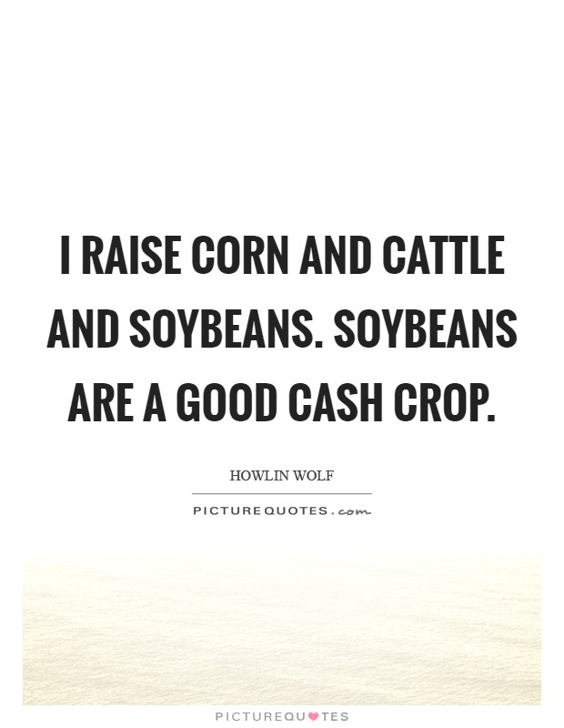 I raise corn and cattle and soybeans. Soybeans are a good cash crop Picture Quote #1