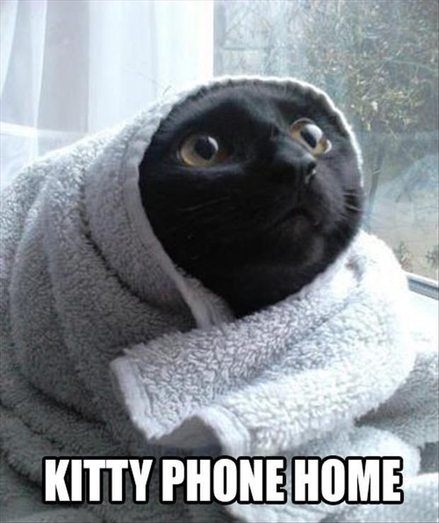 Kitty phone home Picture Quote #1