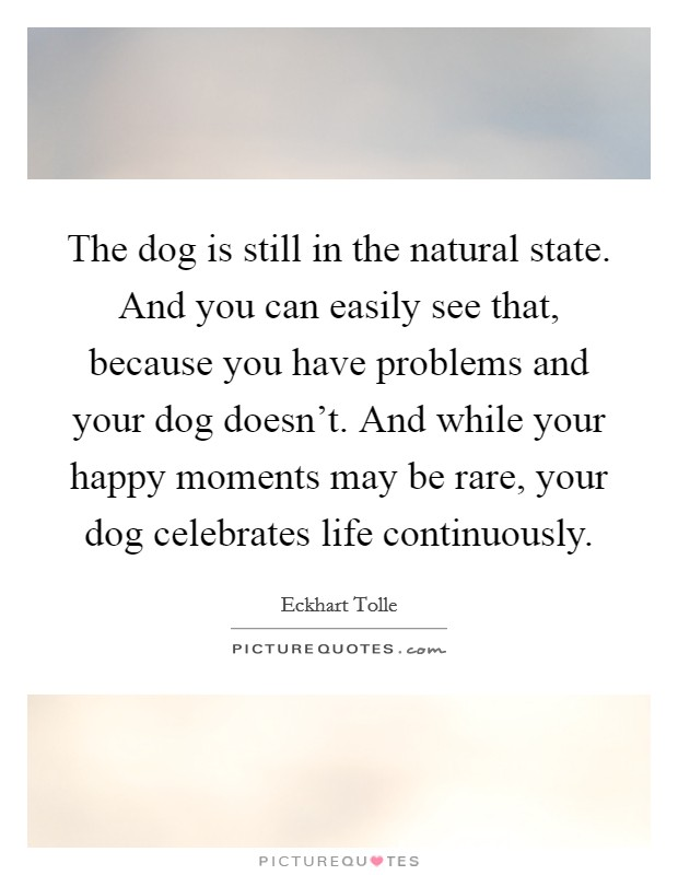 The dog is still in the natural state. And you can easily see that, because you have problems and your dog doesn't. And while your happy moments may be rare, your dog celebrates life continuously Picture Quote #1