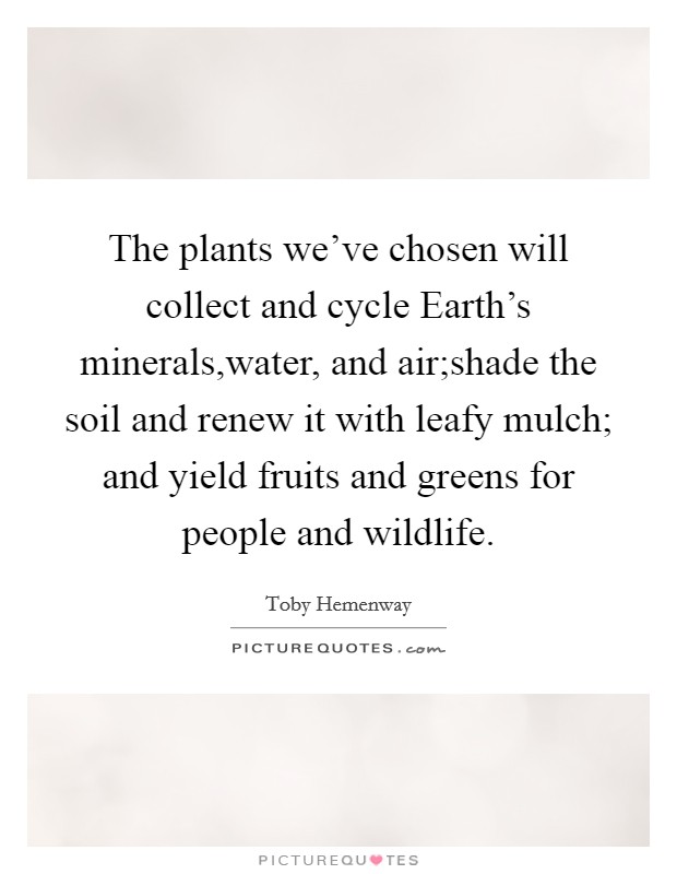 The plants we've chosen will collect and cycle Earth's minerals,water, and air;shade the soil and renew it with leafy mulch; and yield fruits and greens for people and wildlife Picture Quote #1