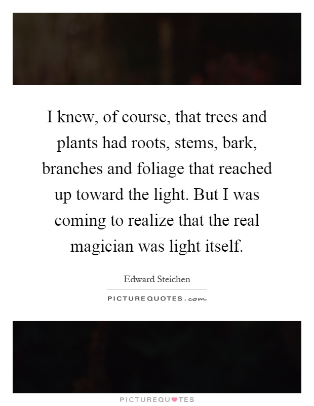 I knew, of course, that trees and plants had roots, stems, bark, branches and foliage that reached up toward the light. But I was coming to realize that the real magician was light itself Picture Quote #1