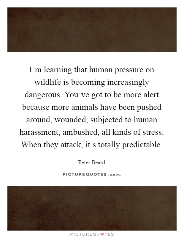 I'm learning that human pressure on wildlife is becoming increasingly dangerous. You've got to be more alert because more animals have been pushed around, wounded, subjected to human harassment, ambushed, all kinds of stress. When they attack, it's totally predictable Picture Quote #1