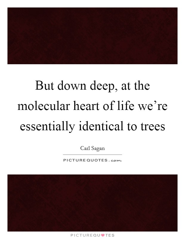But down deep, at the molecular heart of life we're essentially identical to trees Picture Quote #1