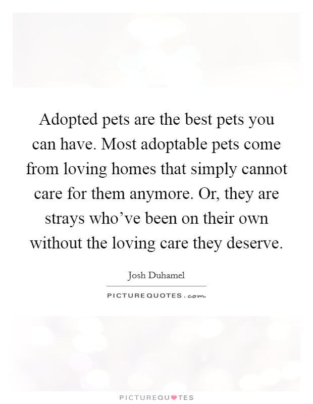 Adopted pets are the best pets you can have. Most adoptable pets come from loving homes that simply cannot care for them anymore. Or, they are strays who've been on their own without the loving care they deserve Picture Quote #1