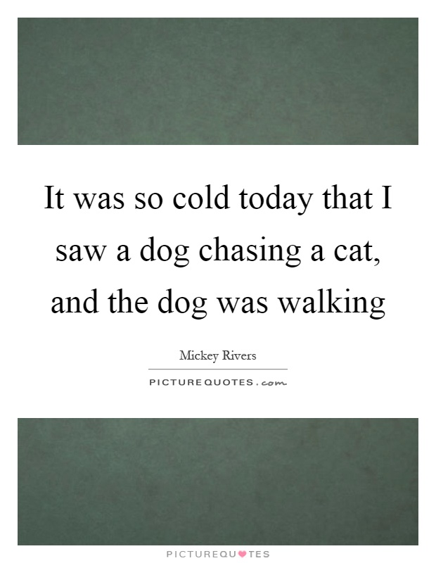 It was so cold today that I saw a dog chasing a cat, and the dog was walking Picture Quote #1