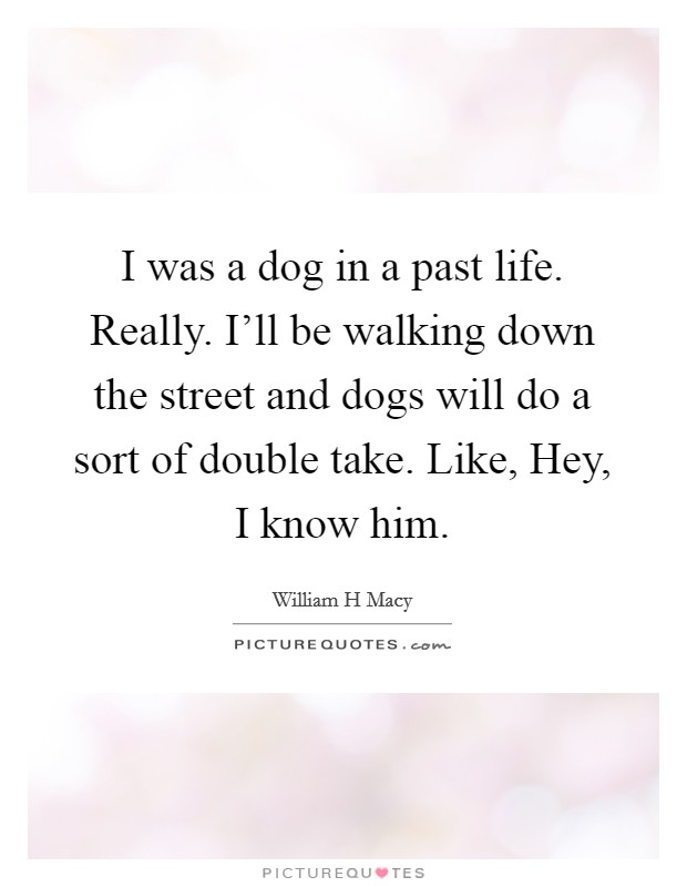 I was a dog in a past life. Really. I'll be walking down the street and dogs will do a sort of double take. Like, Hey, I know him Picture Quote #1