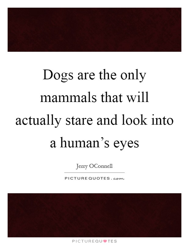 Dogs are the only mammals that will actually stare and look into a human's eyes Picture Quote #1