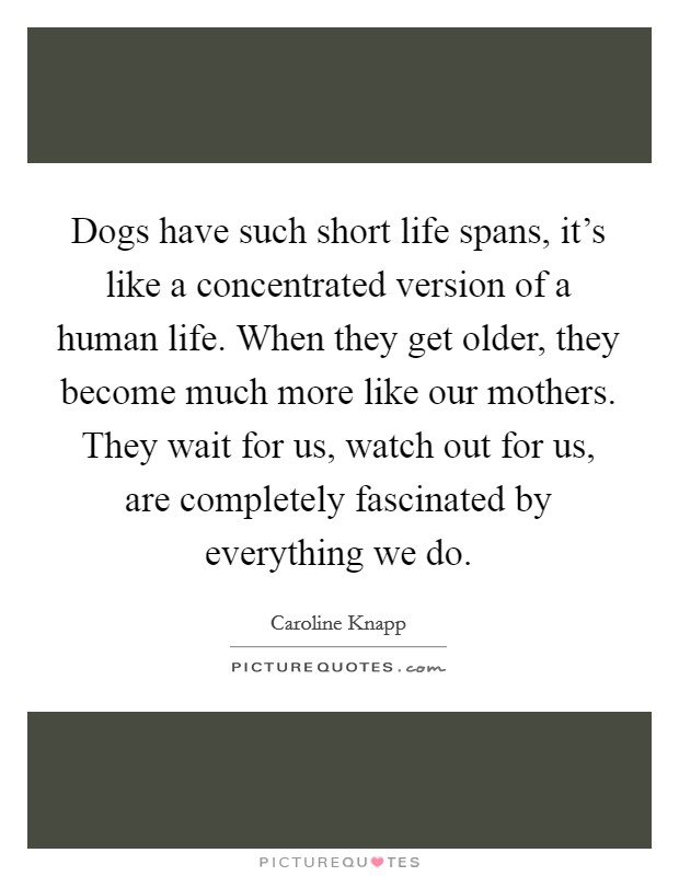 Dogs have such short life spans, it's like a concentrated version of a human life. When they get older, they become much more like our mothers. They wait for us, watch out for us, are completely fascinated by everything we do. Picture Quote #1