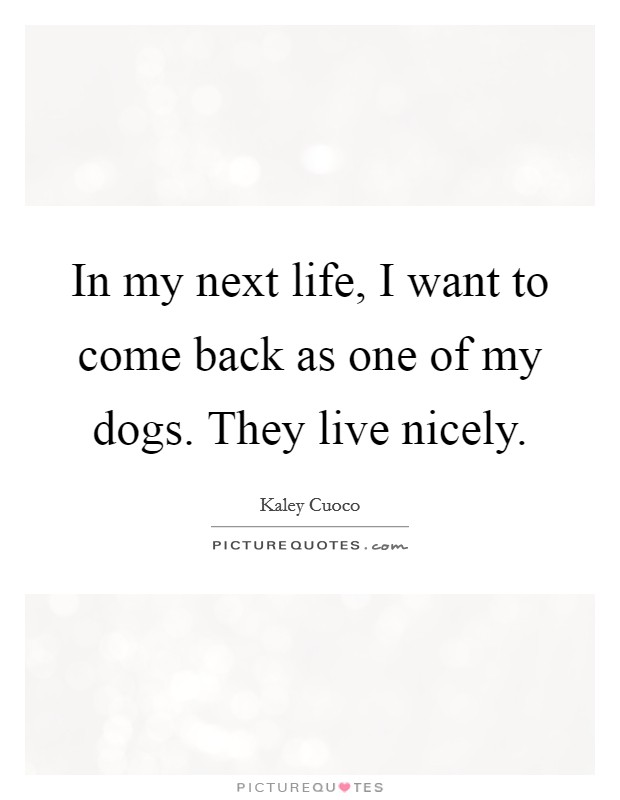 In my next life, I want to come back as one of my dogs. They live nicely Picture Quote #1