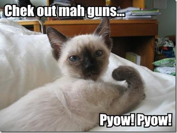 Check out mah guns... Pyow! Pyow! Picture Quote #1
