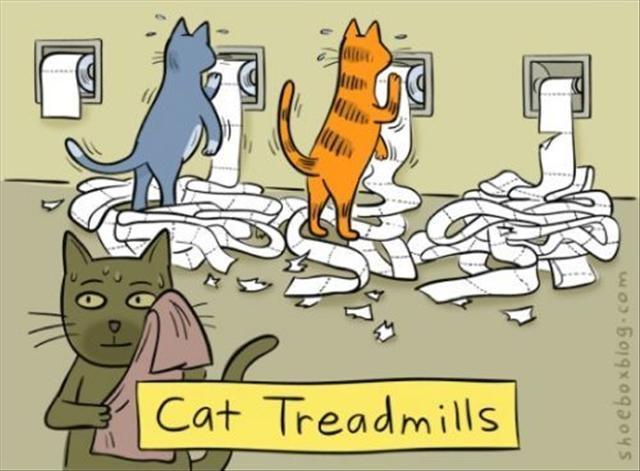 Cat treadmills Picture Quote #1