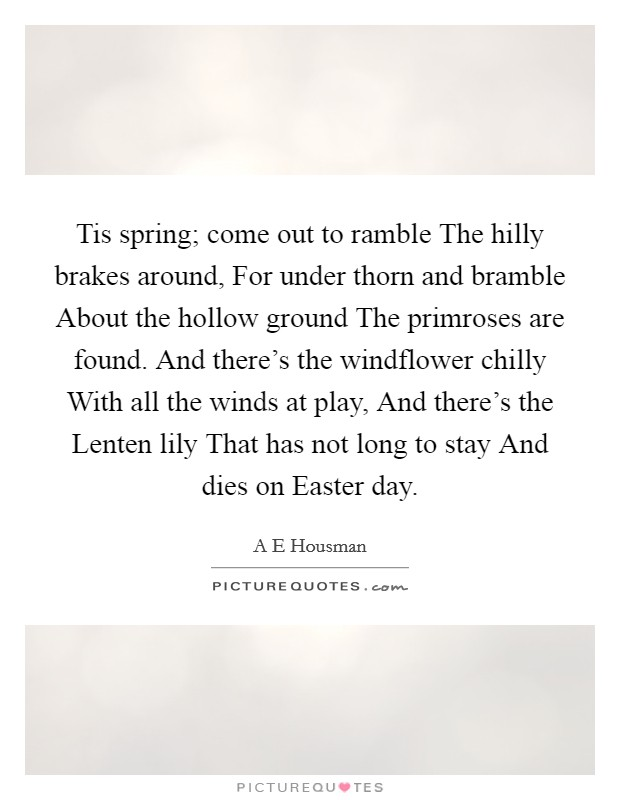 Tis spring; come out to ramble The hilly brakes around, For under thorn and bramble About the hollow ground The primroses are found. And there's the windflower chilly With all the winds at play, And there's the Lenten lily That has not long to stay And dies on Easter day Picture Quote #1
