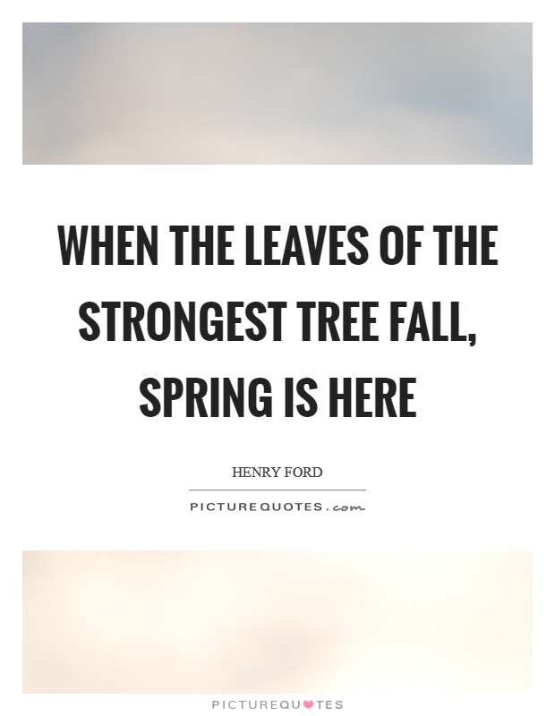 When the leaves of the strongest tree fall, spring is here Picture Quote #1