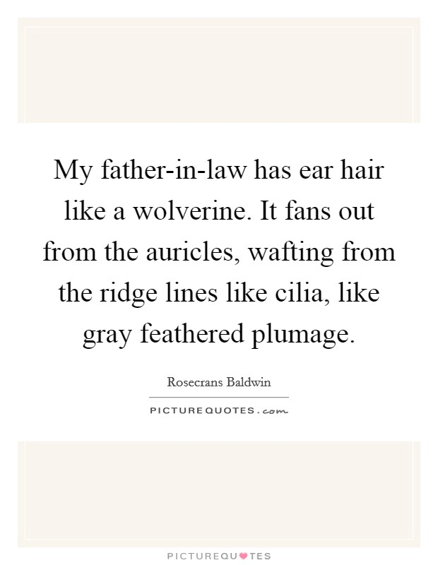 My father-in-law has ear hair like a wolverine. It fans out from the auricles, wafting from the ridge lines like cilia, like gray feathered plumage Picture Quote #1