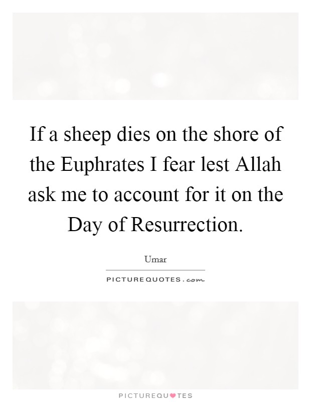 If a sheep dies on the shore of the Euphrates I fear lest Allah ask me to account for it on the Day of Resurrection Picture Quote #1