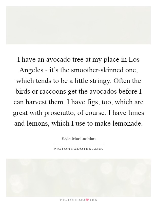 I have an avocado tree at my place in Los Angeles - it's the smoother-skinned one, which tends to be a little stringy. Often the birds or raccoons get the avocados before I can harvest them. I have figs, too, which are great with prosciutto, of course. I have limes and lemons, which I use to make lemonade Picture Quote #1