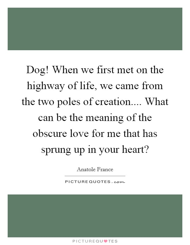 Dog! When we first met on the highway of life, we came from the two poles of creation.... What can be the meaning of the obscure love for me that has sprung up in your heart? Picture Quote #1