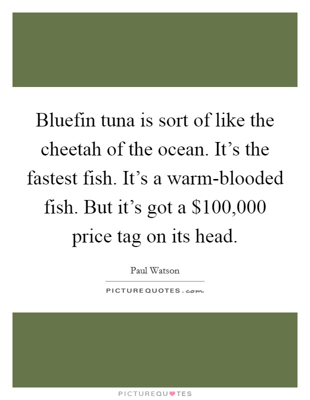 Bluefin tuna is sort of like the cheetah of the ocean. It's the fastest fish. It's a warm-blooded fish. But it's got a $100,000 price tag on its head Picture Quote #1