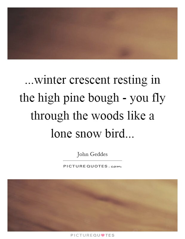 ...winter crescent resting in the high pine bough - you fly through the woods like a lone snow bird Picture Quote #1